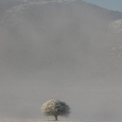 a lonely snow covered tree on the valley of soudena in central zagori