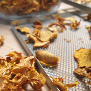 dried chanterelles