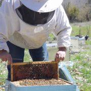 oak honeydew honey