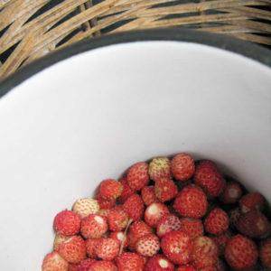 wild strawberry marmalade